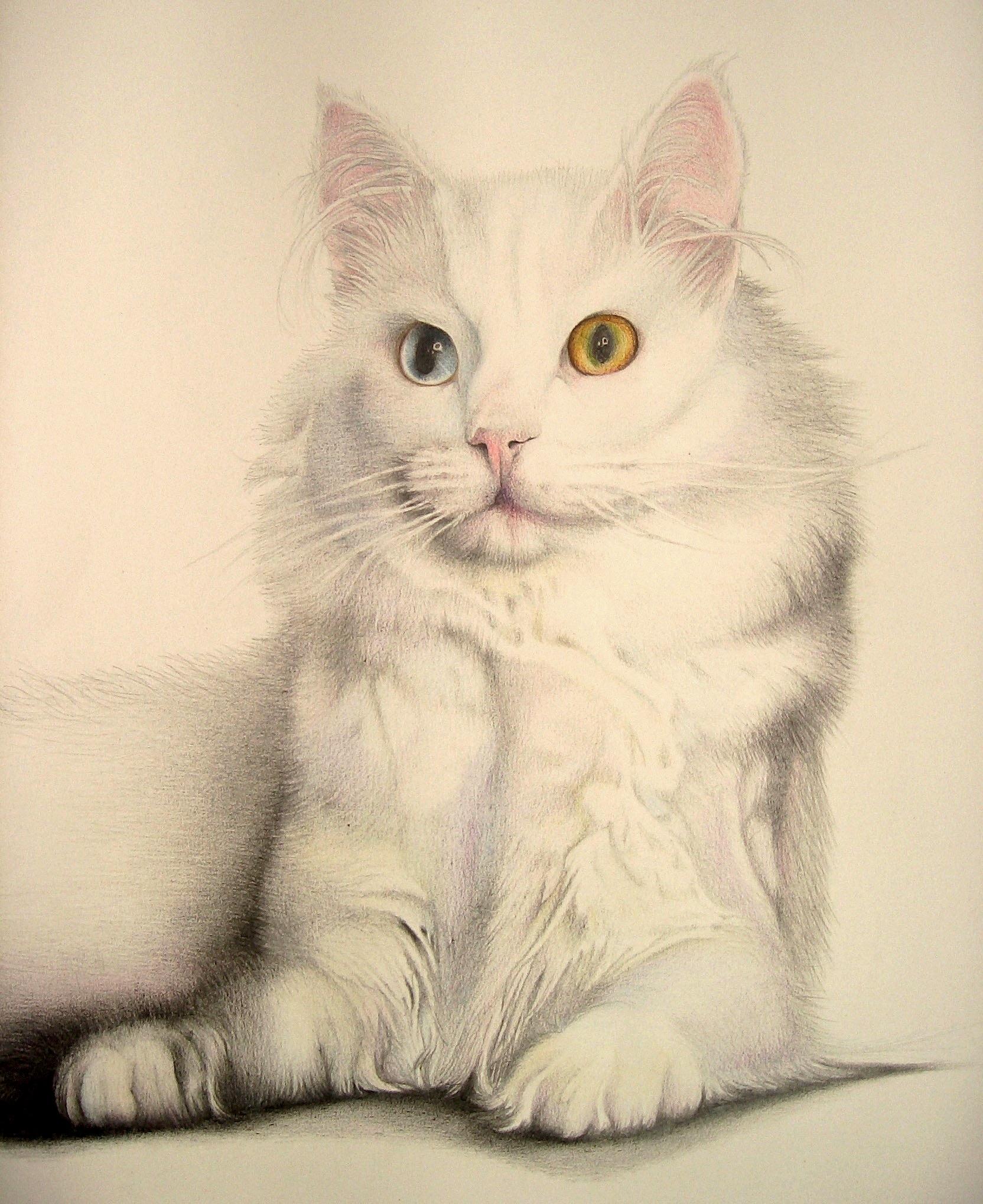 gatto - particolare matite colorate
